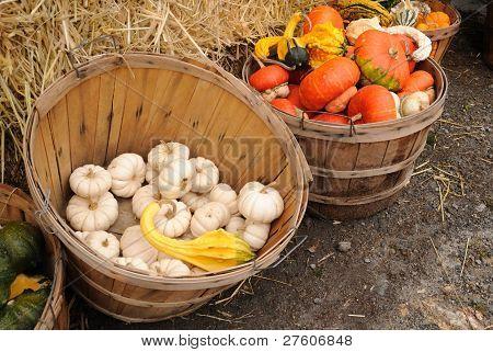 Bushel baskets of gourds and pumpkins