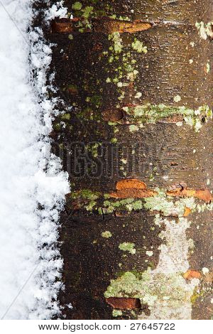 Tree Trunk In The Winter With Snow