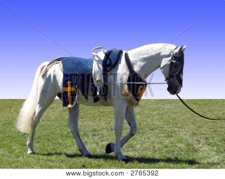 Horse With Vaulting Saddle