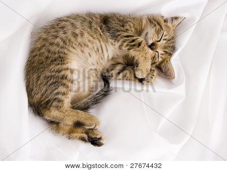 Gato sonolento