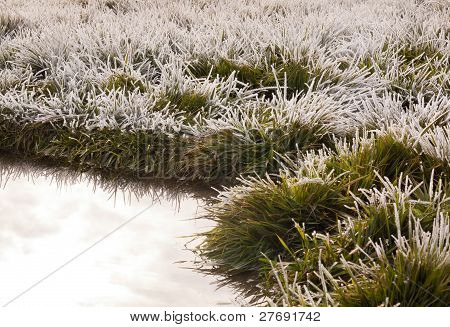 Frost On Grass With Pond