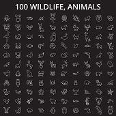 Wildlife, Animals Editable Line Icons Vector Set On Black Background. Wildlife, Animals White Outlin poster