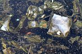 Dirty Water, Garbage Moss In The Sewage, Rotten Waste Water, Industrial Water Pollution, Waste In Th poster