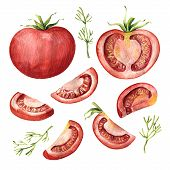 Tomato Vegetable Set - Whole, Half, Slices And Segments, Watercolor Illustration Isolated On White B poster