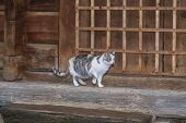 Three-color Beautiful Cat.cute Gray Cat Sitting On A Wooden Bench Outdoors .a Gray Cat Sits On A Woo poster