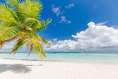 Tropical Beach Background As Summer Landscape With Beach Palm Trees And White Sand And Calm Sea For  poster