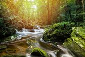 Mountain River Stream Waterfall Green Forest Landscape Nature Plant Tree Rainforest Jungle Small Wat poster