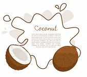 Coconut Exotic Fruit Vector Poster Frame And Place For Text. Tropical Food, Plant In Brown Shell, Di poster