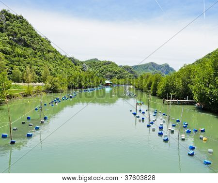 Shrimp Farm, Thailand