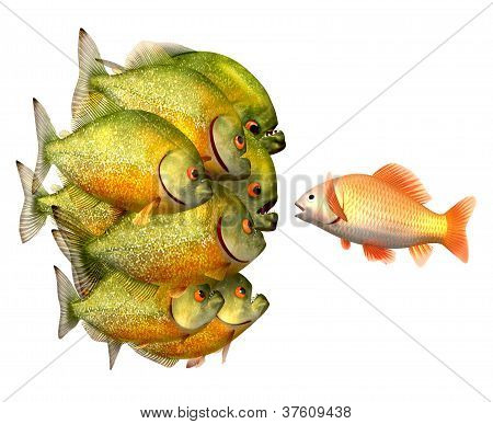 Persuasion concept, goldfish and piranhas