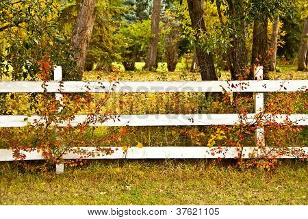 Autumn Fence