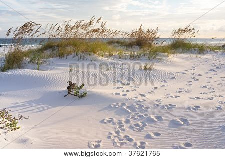 Footprints In The Beach Dunes