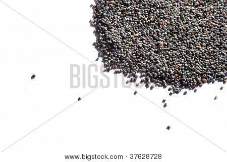 Poppy Seeds, Bread Seeds, Papaver Somniferum,