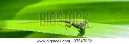 Caribbean Green Anole (anolis Carolinensis) Lizard