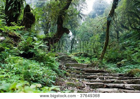 nepalian rainforest with pathway