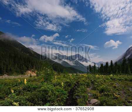 Blooming Meadow In A Mountain Valley