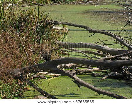 Dry Logs On A Bog