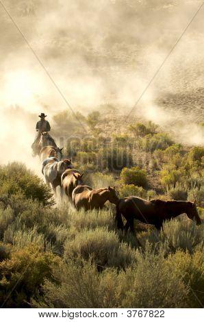 Cowboy Morning