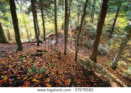 Forest in Algonquin Park, Canada
