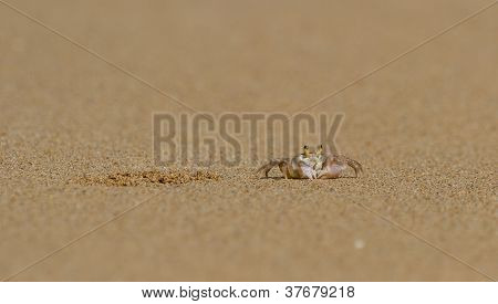 Crab Next To Its Burrow