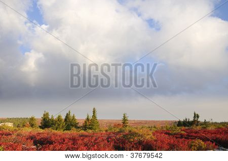 Fall Landscape with Dramatic Sky