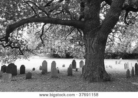 Tree and headstones