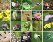 stock photo of mating animal  - Biodiversity collage with all non - JPG