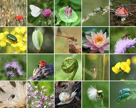 stock photo of biodiversity  - Biodiversity collage with all non - JPG