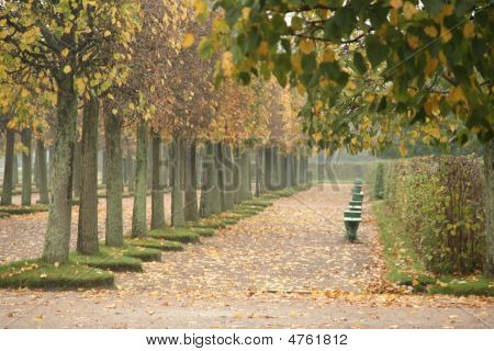 Autumn Promenade Alley