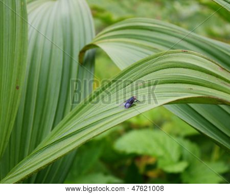 Fly in the Foliage