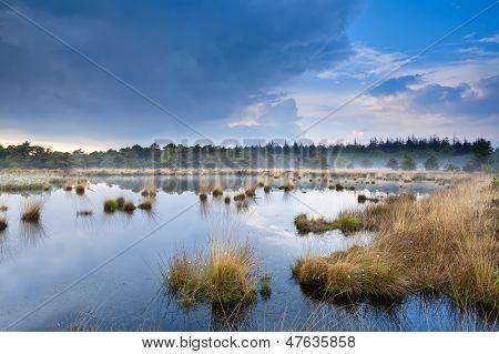 Light Fog Over Swamp After The Rain