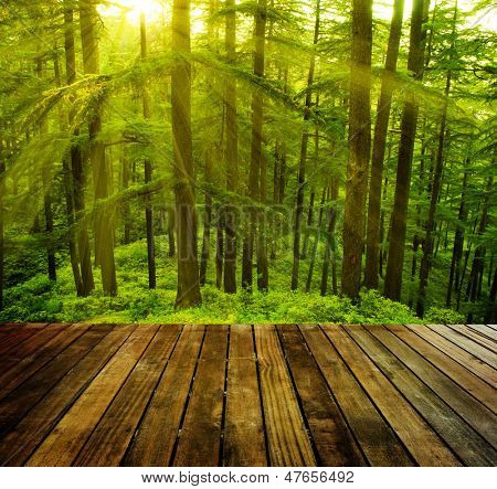 Wooden platform in pine tree forest, golden sunlight at Shimla during sunset, the capital city of Himachal Pradesh, India.