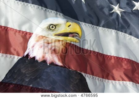 Eagle In Flag