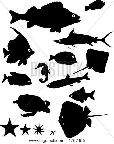 Many Silhouettes Of Fish