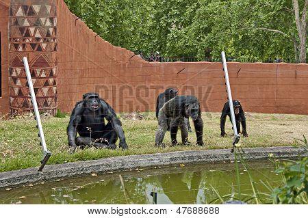 Primates, monkey, ape