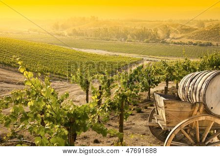 Grape Vineyard with Vintage Barrel Carriage Wagon.