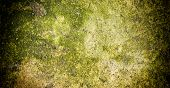 stock photo of fungus  - Mold on stone Grunge background with fungus spots - JPG
