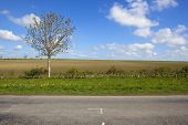 stock photo of plowed field  - a lone tree in a newly planted hedgerow by the side of a road near plowed fields under a blue sky in springtime - JPG