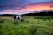 stock photo of apache  - Apache horse grazing on pasture at dramatic sunset - JPG