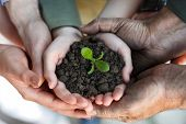 stock photo of environmental conservation  - farmers family hands holding a fresh young plant - JPG