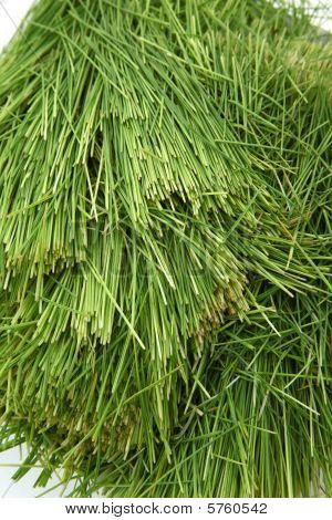 Montón de pasto de trigo