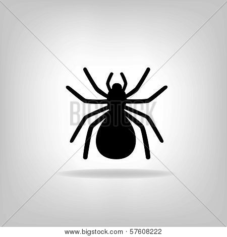 Black Spider On A White Background