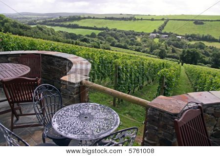 A green grape / wine vineyard with table and chairs