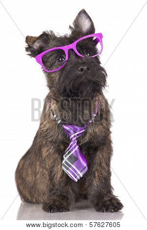 adorable puppy in glasses and tie