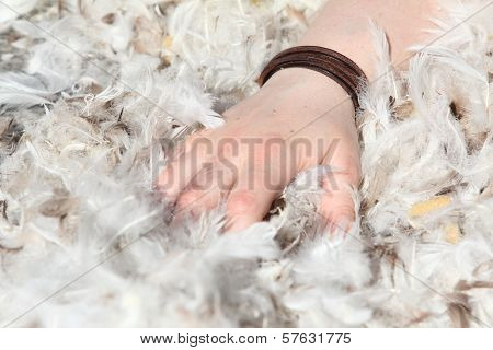 hand grabbing in downy feathers