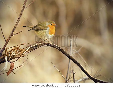 Small Colorful Bird