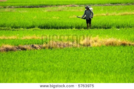 Farmer Spray Insecticide In The Farm