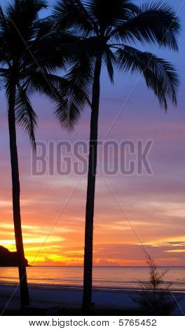 Palm Trees Against Sunset