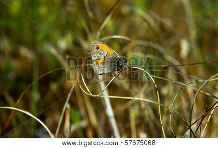 One Dotted Butterfly