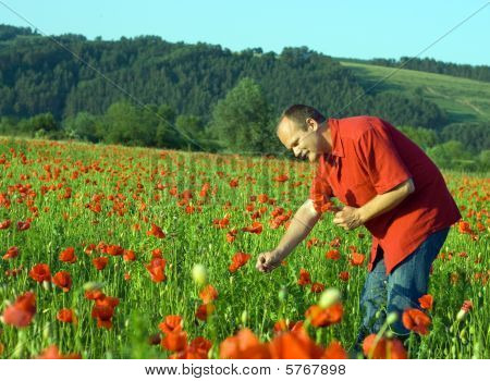 Man Picking Flowers In A Field Of Poppy